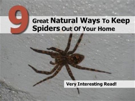 keep spiders out of house 1000 images about getting rid of pests on 7624