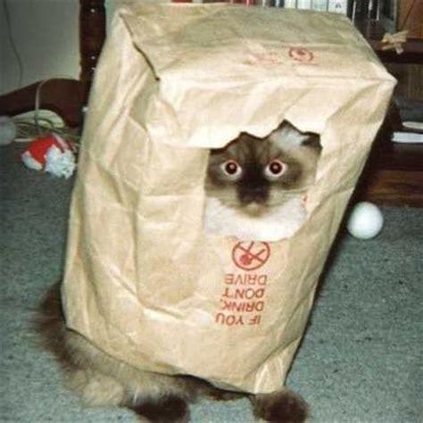 cat  bag atcatorbag twitter