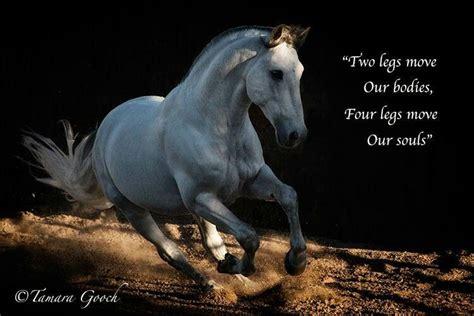 horse caballos majestic hermosos gooch andalusian horses