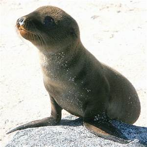 baby sea lion on Tumblr