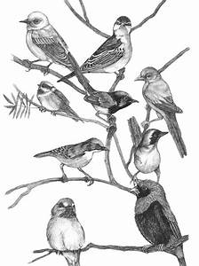 Birds Black And White Drawing