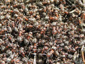 Ameisen Im Haus Ursache : hausmittel gegen ameisen in haus und garten hausmittel ~ A.2002-acura-tl-radio.info Haus und Dekorationen