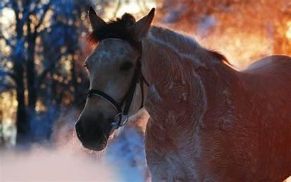 Horse Winter Desktop Wallpapers Backgrounds Computer Animal