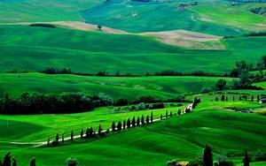 Green Field Nature Wallpaper