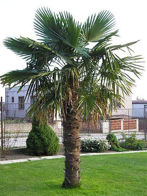 Winterharte Gartendeko by Die Besten 25 Palmen Garten Ideen Auf Palmen