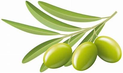 Olive Olives Clipart Clip Transparent Branch Yopriceville
