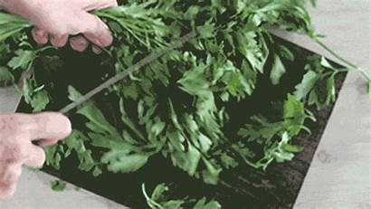 Herbs Prepare Yours Low Cut Fresh