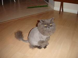 The Lion Cut Add It To The List