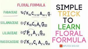 Floral Formula For Neet  Aiims  Aipmt  Jipmer