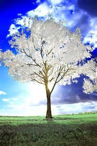 white tree by helios spada on deviantart
