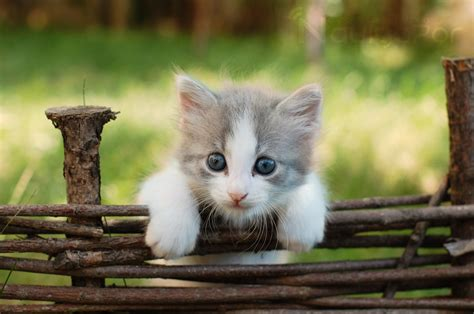 Kitten Backgrounds by Kittens Cats