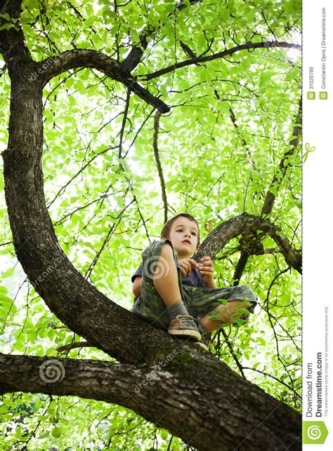 tree stock image image  strength carefree