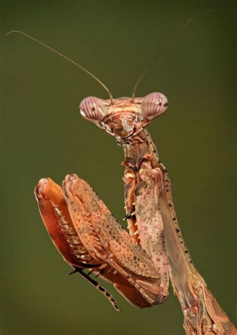 strange  funny insects  bugs hubpages