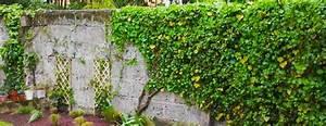 Plantes Grimpantes Mur : les plantes grimpantes jardiniers professionnels ~ Melissatoandfro.com Idées de Décoration