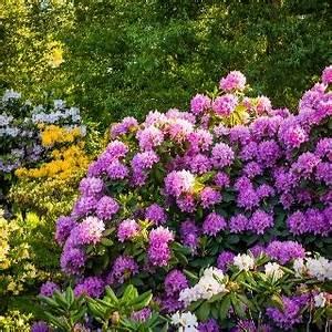 Pflanzen Für Schattige Plätze : blumen schattiger standort wohn design ~ Orissabook.com Haus und Dekorationen