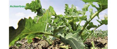 dünger ohne stickstoff ohne schwefel wirkt stickstoff nicht aus dem heft acker top agrar nachrichten