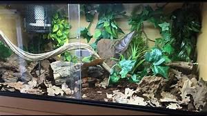 Ball Python Aquarium Setup