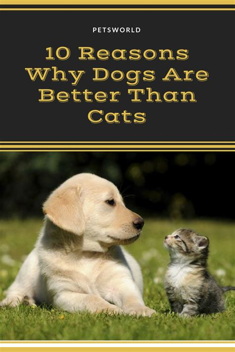 dogs cats better than petsworld reasons why