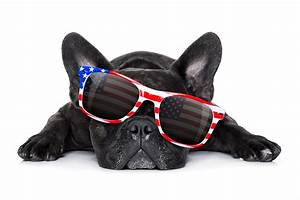How to Keep Pets Safe on the Fourth of July