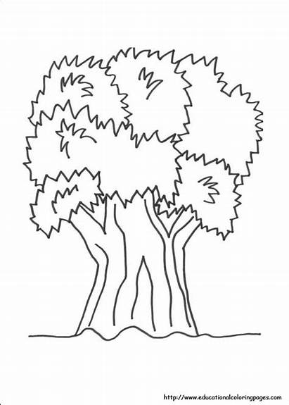 Nature Coloring Pages Drawing Printable Mother Ukg