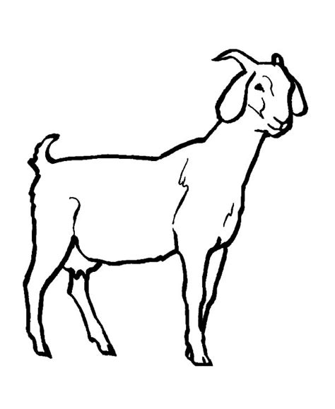 Coloring Kambing by Goat Coloring Pages Clipart Best