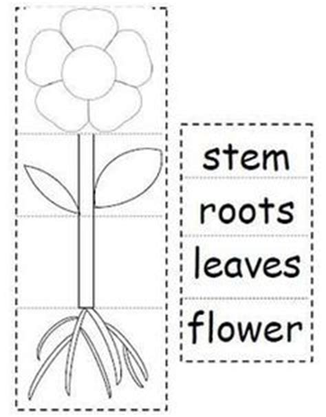 learning about the parts of a plant plant activities for 731 | 10f73fbe7d55f250b84d061436ada89f worksheets for kindergarten parts of plants kindergarten