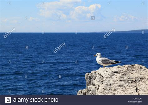 Perched On The Cliff Edge Overlooking The Sea by A Seagull Perched At The Edge Of A Cliff Overlooking The