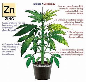 Fix The Zinc Deficiency With Your Cannabis Plants