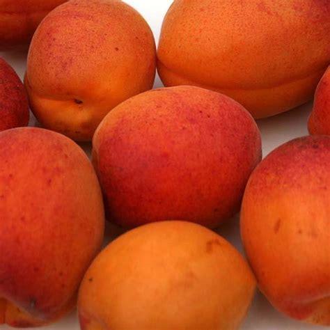 Prunus Moorpark - Moorpark Apricot Tree   Mail Order Trees