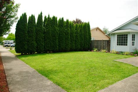 Protect Your Privacy With These Evergreen Trees