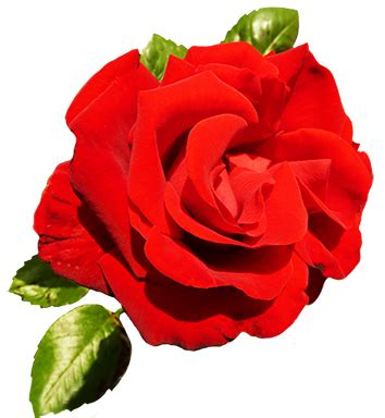 Red Rose Day Clip Art