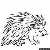 Porcupine Coloring Drawing Pages Animals Line Printable Animal Thecolor Drawings Easy Getdrawings Preschool General Results Getcolorings Got sketch template