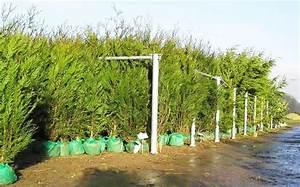 Quels Arbustes Pour Une Haie : quel arbre pour haie haute ~ Premium-room.com Idées de Décoration