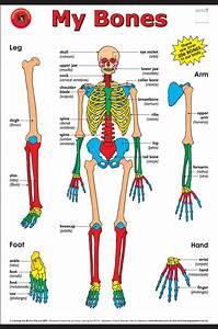 My Bones Cart For  15 00