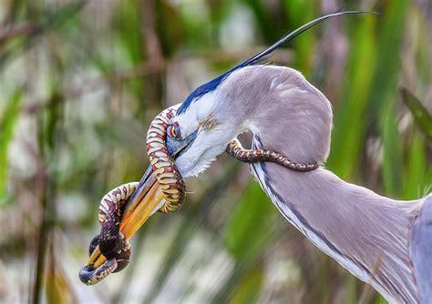 audubon crowns the best bird photos of 2015 film and