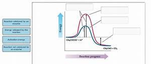 35 Energy Diagram Catalyzed Vs Uncatalyzed Reaction