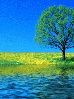 Animated Gif Nature Wallpapers - 35 gif images of nature beautiful gif images animated