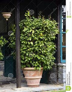 Plantes Grimpantes Pot Pour Terrasse : plante en pot sur la terrasse photo libre de droits ~ Premium-room.com Idées de Décoration