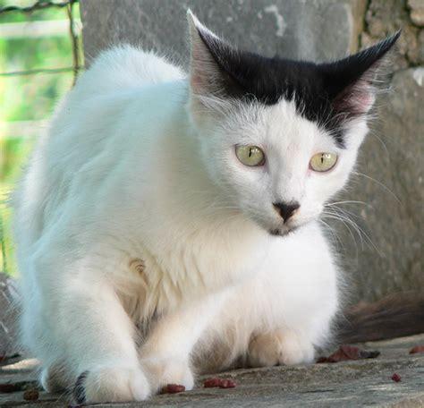 cats    hitler    cute af