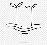 Coloring Sprouts Line Clipart Pinclipart sketch template