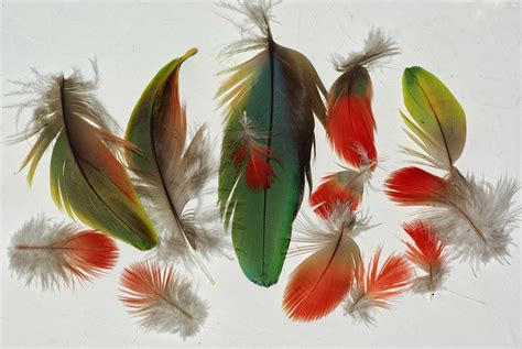 entretien des plumes