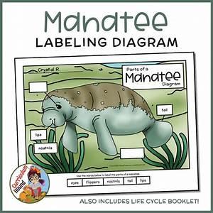 Label A Manatee Diagram