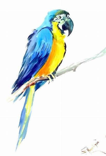 Watercolor Bird Macaw Painting Paintings Animals Pencils