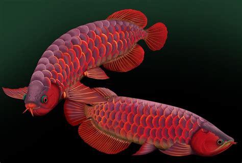 freshwater aquarium fish species