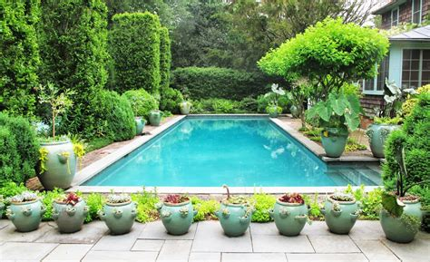 plants to put around a pool swimming pools in orlando artificial grass orlando florida