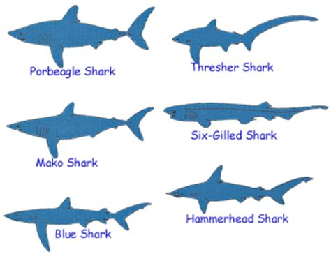 saltwater fish identification