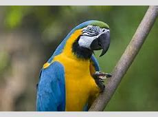 Tropical and Exotic Bird Facts for Kids