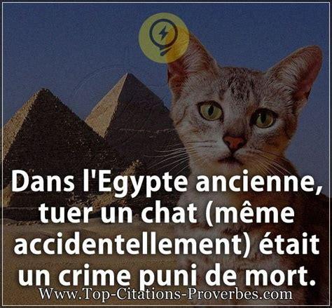 Meme Chat - citation courte dans l egypte ancienne tuer un chat m 234 me accidentellement 233 tait un crime