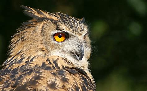 Owl Wallpapers by Hd Owl Wallpapers Owl Pictures Hd Animal Wallpapers