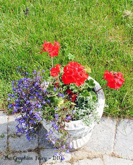 plant  garden flower pot  favorite combo
